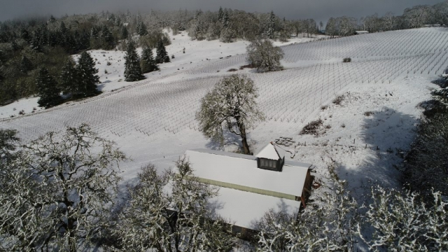 Winery and Almost-Pruned Vineyard, March 2017